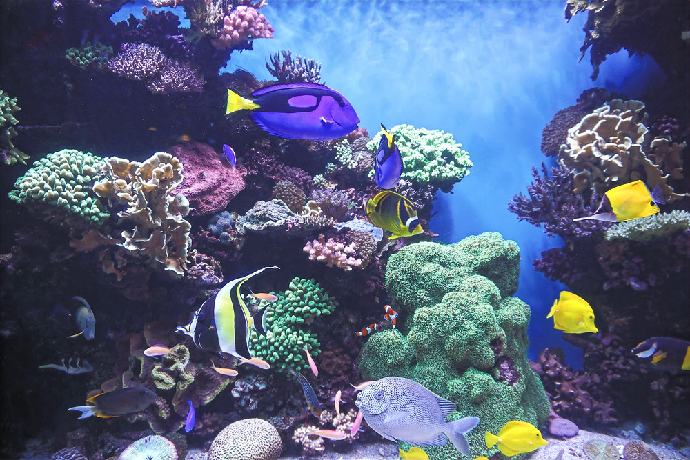 Located at the ocean's edge on historic Cannery Row, the Monterey Bay Aquarium is your window to marine life.