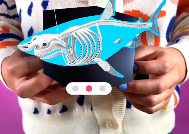 shark skeleton screenshot (1).jpg