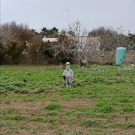 guardian of the garden.jpg