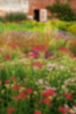 cut flowers achillea yarrow flower beds walled garden