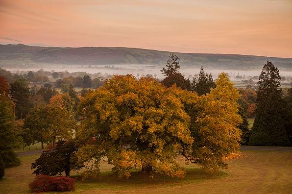 Plas Dinam, Powys, arboretum, Fall colour, autumn colour, autumn leaves, oaks, autumn, tree, landscape, garden, Wales countryside