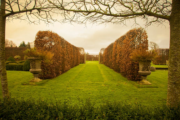 winter garden beech hedges classical urns garden design avenue allee