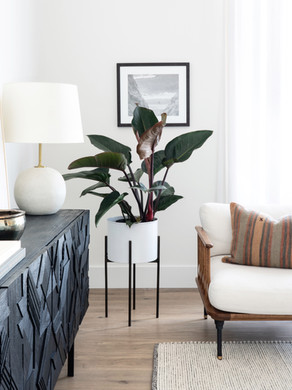 Tips to Help Your House Plants Thrive