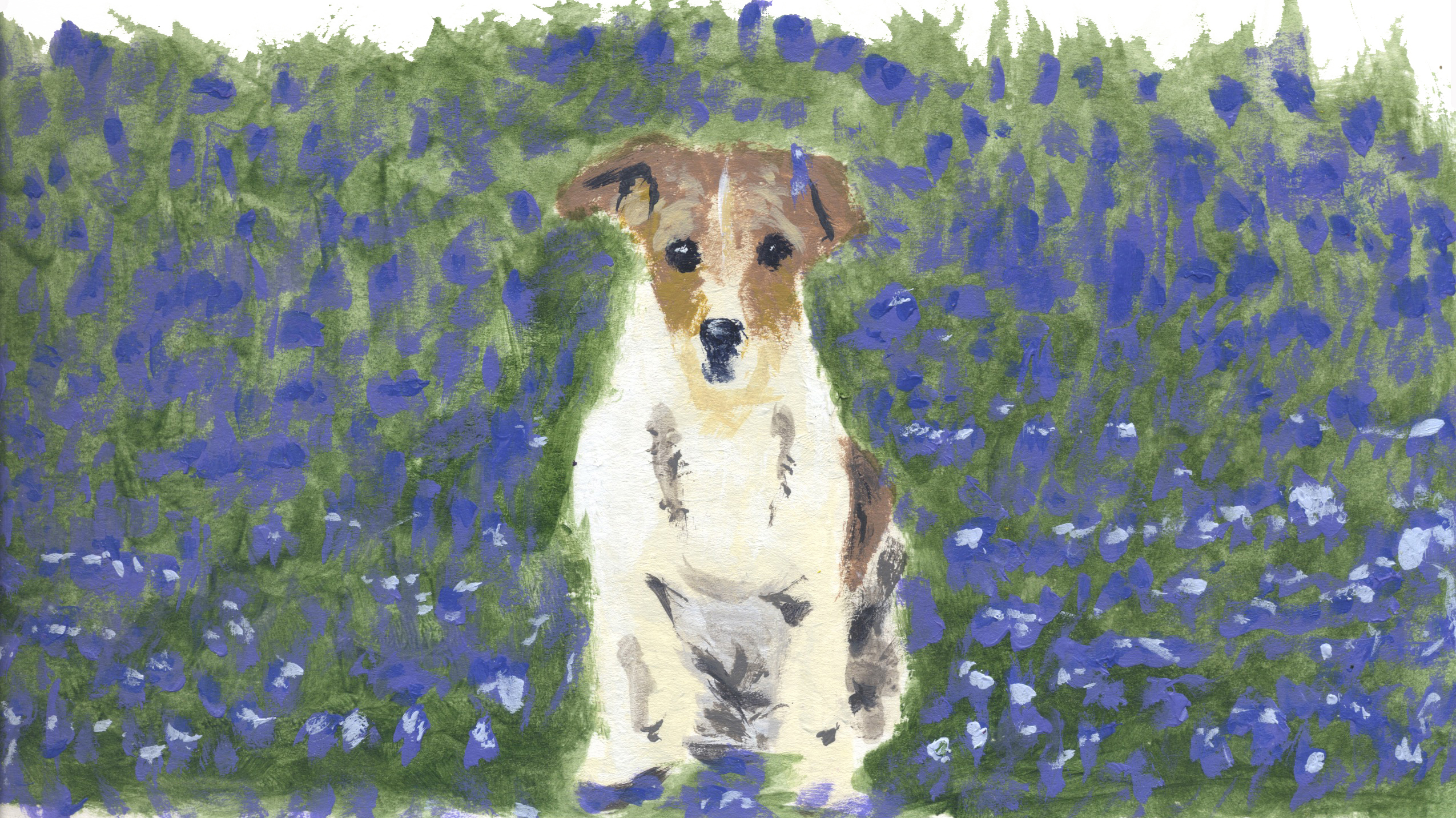 Jack Russel in Bluebells