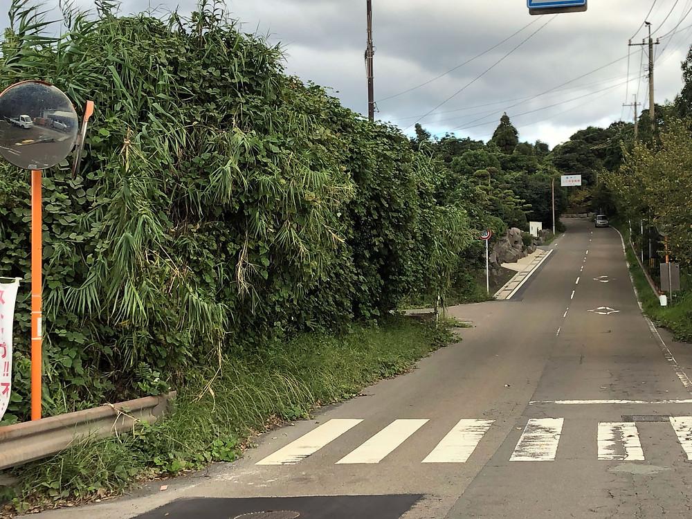 作業前のバス停は草が茂って停留所看板も見えない様子。