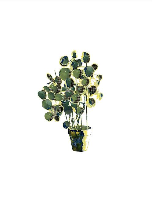 Plant I (20X30 cm)