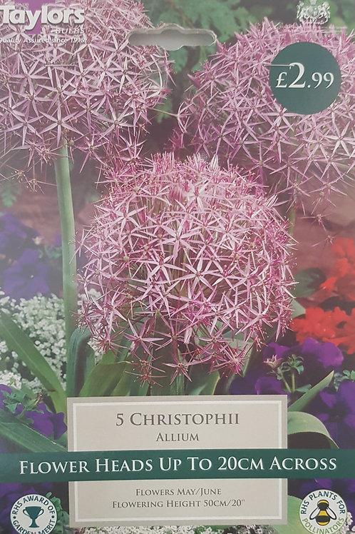 5 Christophii Allium