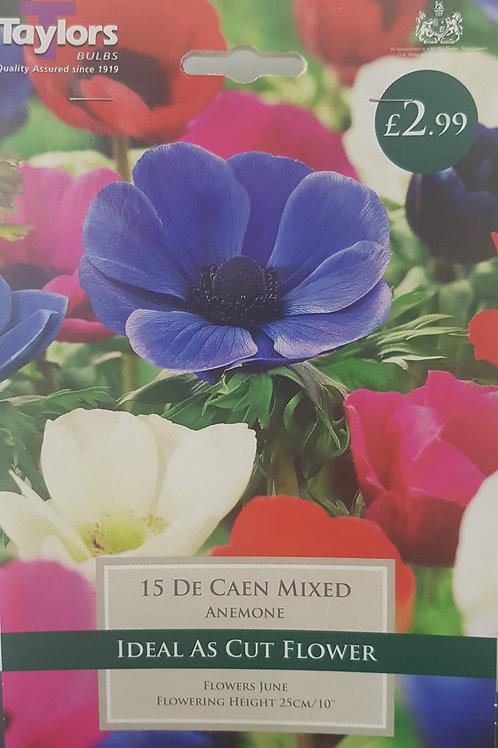 15 De Caen Mixed Anemone