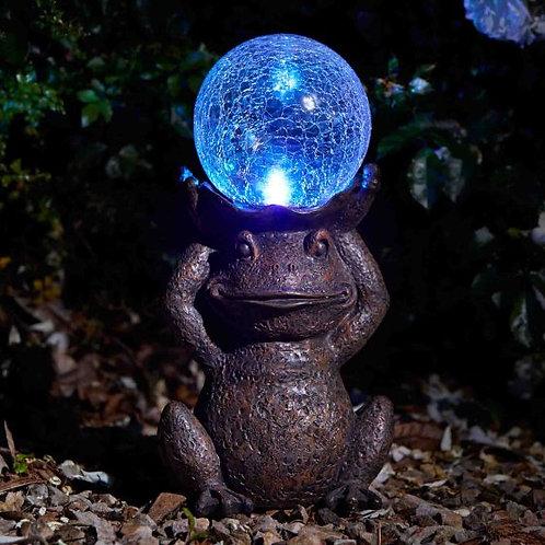 Gazing Frog - solar