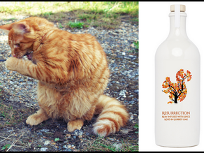 """""""Do you think I could be the model for Resurrection Rum also?"""""""