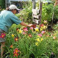 Laurie-Plant-Nursery-home-slider.jpg