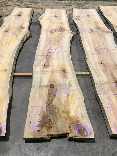 New Cypress #78