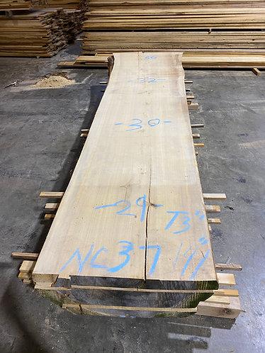 New Cypress #37