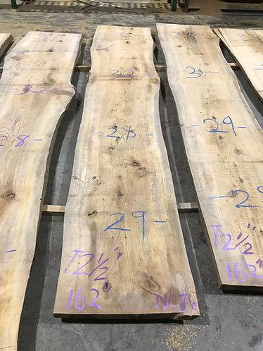 New Cypress #76