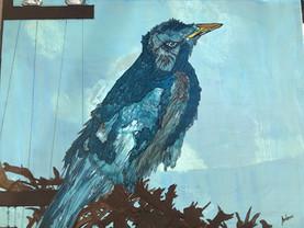 Bird Experiencing Homelessness 2020