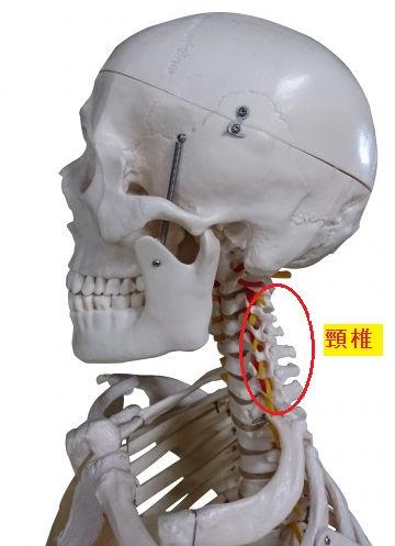 急性・慢性の辛い首の痛み解消
