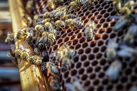 Tessa Mercieca - Bees.jpg