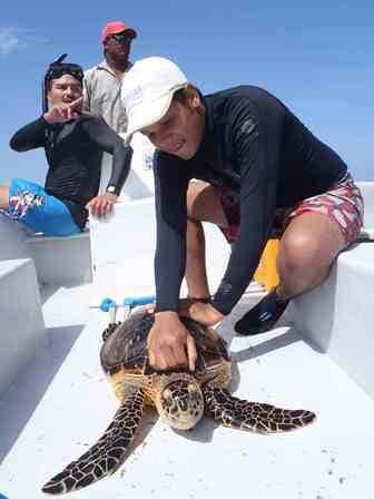allan_romero_turtle_survey_turneffe_atoll.jpg