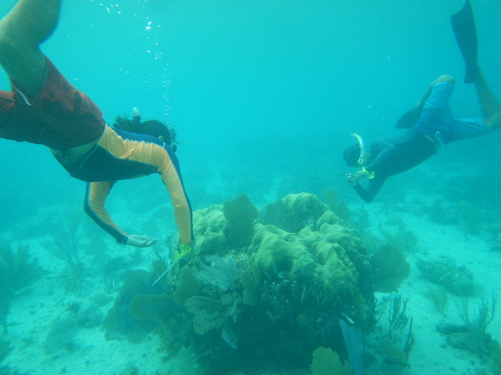 The team selecting coral colonies
