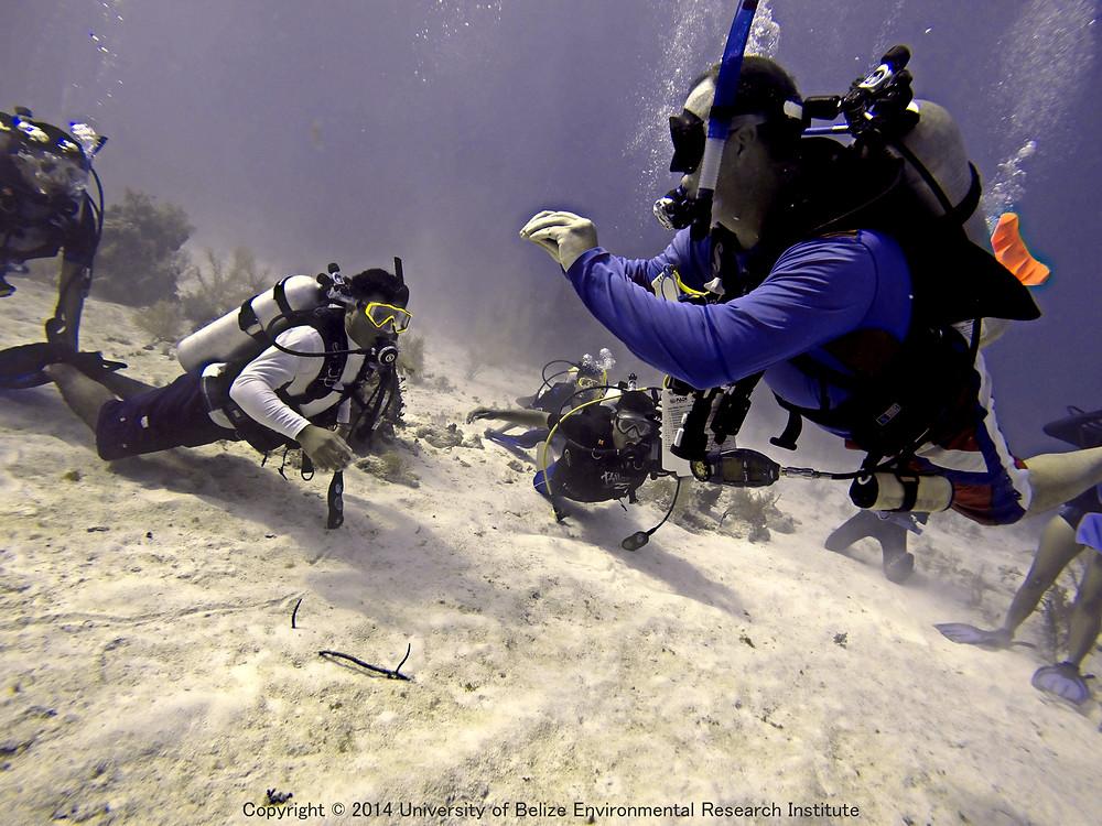 Buoyancy Dive (8).jpg