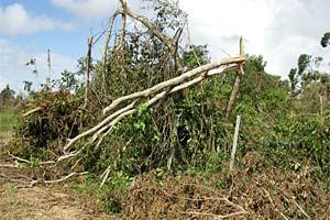 destroyed_trees.jpg