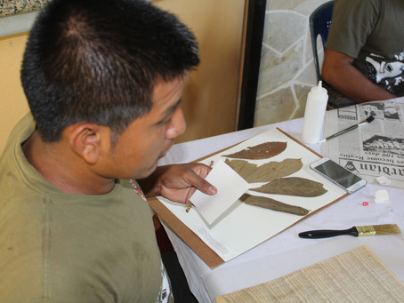 Collaborating for Belize's National Herbarium