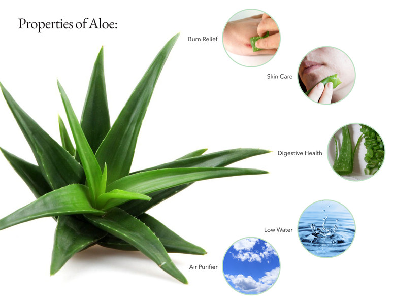 PlantHolderP2.jpg