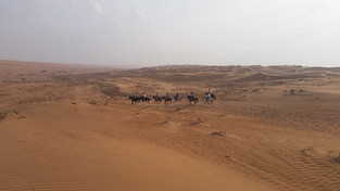 bezkres pustyni