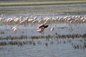 flamingo-2794001_1920.jpg
