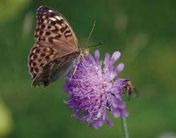 BENO6591 mosca e farfalla_1200px