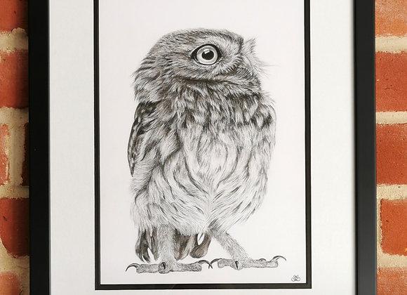 Original: Little Owl