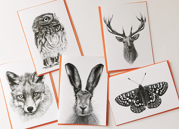 British Wildlife cards pack