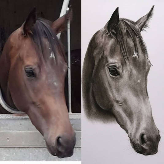 Lady Quickstep photo vs drawing