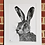 Thumbnail: 'Harry Hare' print