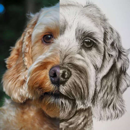 Rupert photo vs drawing