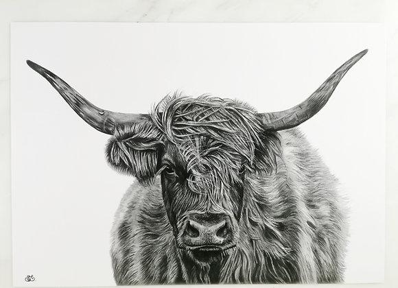 Highland Cow print