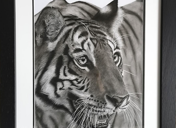 'Eye of the Tiger' Original