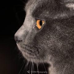 Dicas de Fotografia Pet Mon Pet