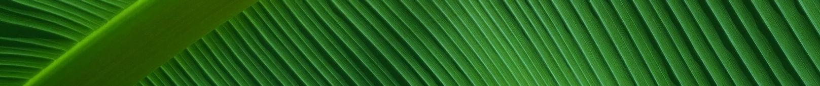 leaf_edited_edited.jpg