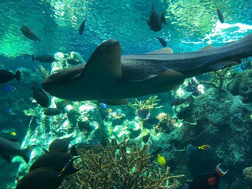 ロサンゼルス 太平洋水族館02