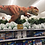 Thumbnail: Toys R Us Store Display 3m