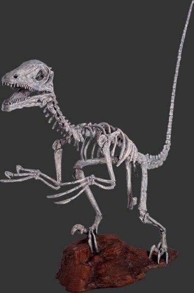 Deinonychus Skeleton / Life Size