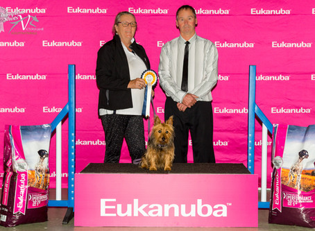 Canine Ed goes to ANKC Agility Nationals