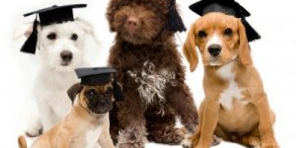 IMDT Perfect Puppy - Online Classroom