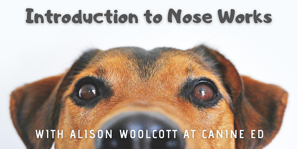 Introduction to Nose Works with Alison Woolcott