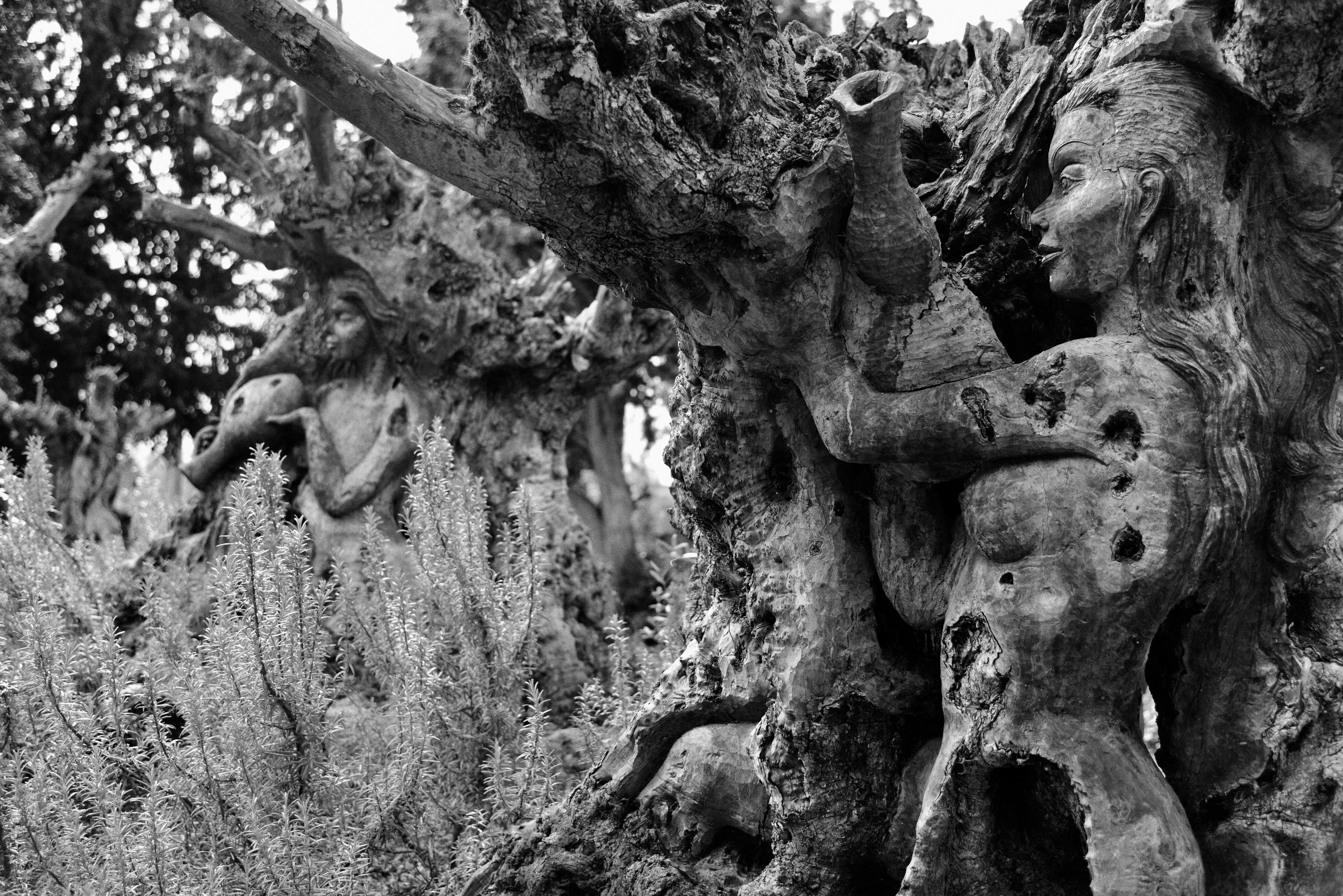 Tree people, 2016