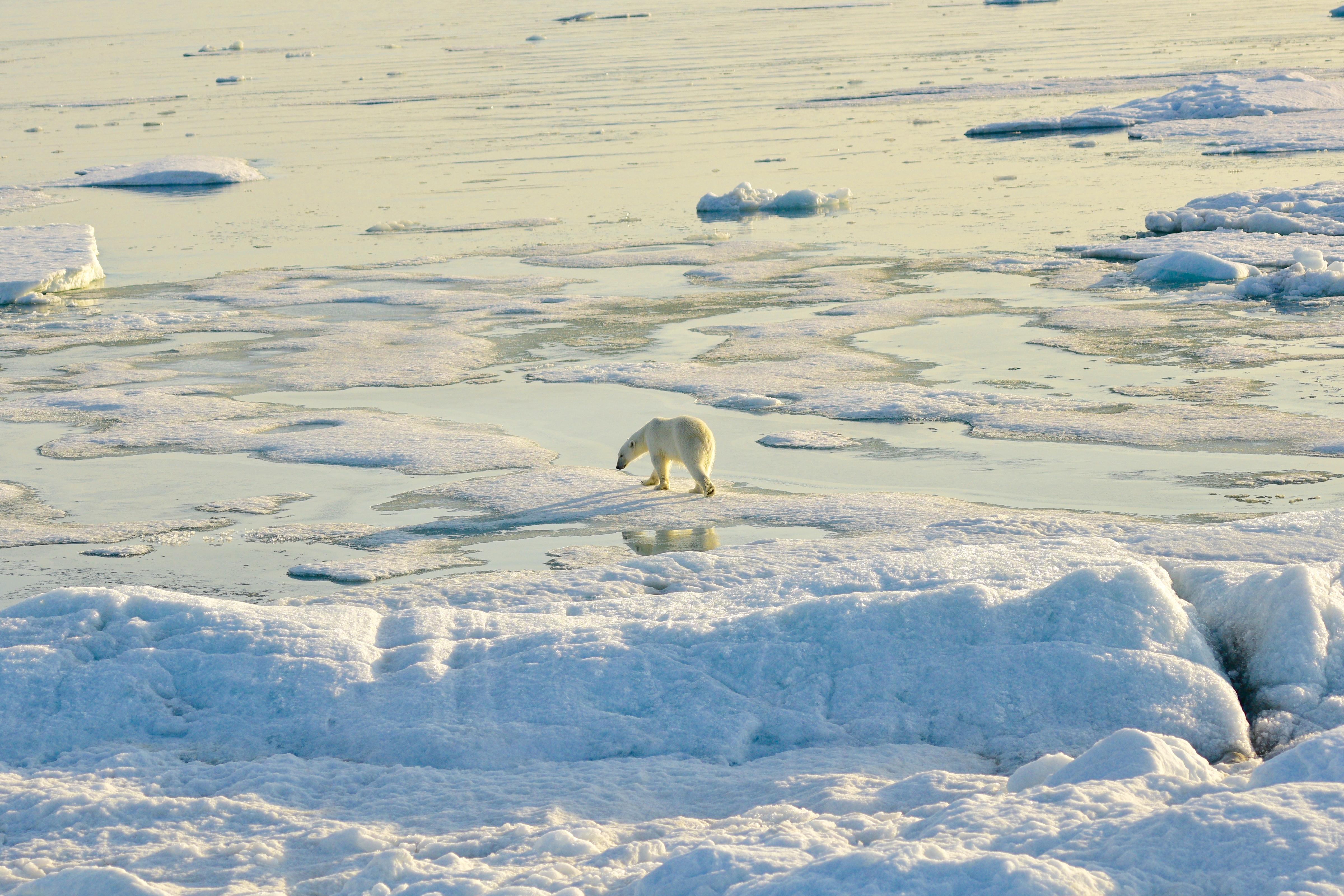 Pack ice, Svalbard 2015