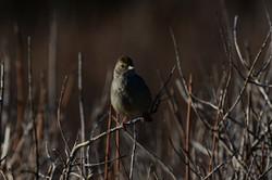 Small bird, Big Sur 2017