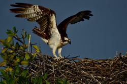 Osprey, Florida 2016