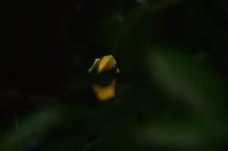Peek a boo in the rain forest 2015